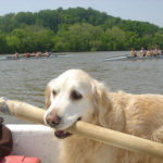 Guest Rowers